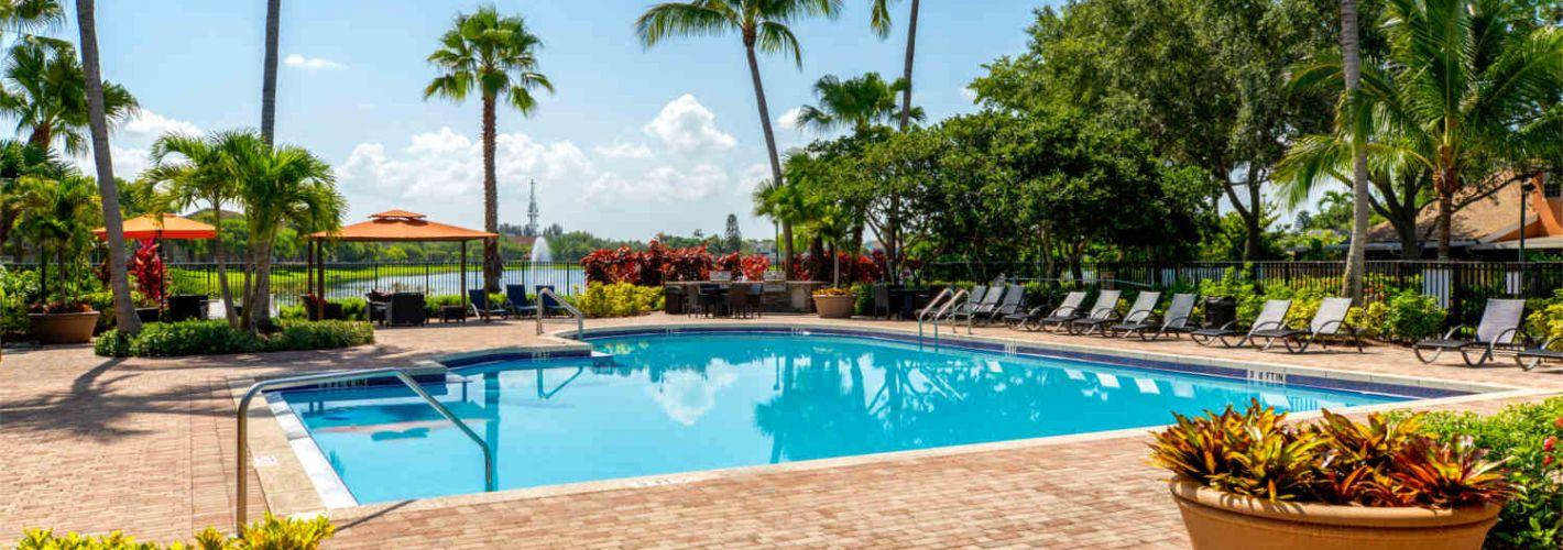 The Palms : Pool